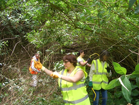 Volunteers cutting vegetation at Taplow Pit in 2008.
