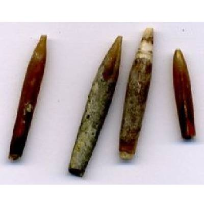 Belemnites, mainly Neohibolites,  were abundant in the Gault sea. These remains are part of the internal
