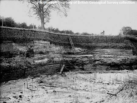 Pit N. of Tree Farm, Shenley, near Leighton Buzzard. Looking NW. Junction of Upper Gault and Lower Greensand. The photograph shows the cross-stratified silver-sands at the base of the stratified loamy succeeding beds trangressed by the Upper Gault.